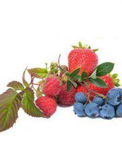 FlavourArt Forrest Mix Forest fruit mix